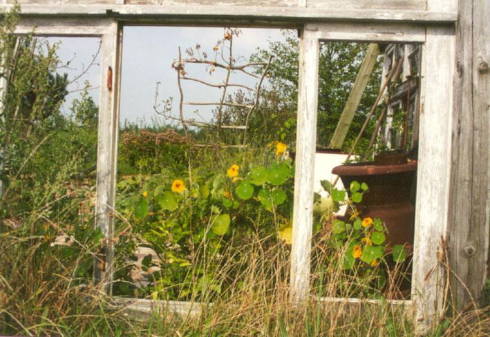 ribesundpaeonia  gartenberatung gartenplanung und gartenpflege in